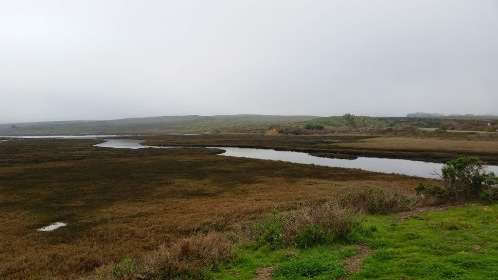 Point Reyes Fog